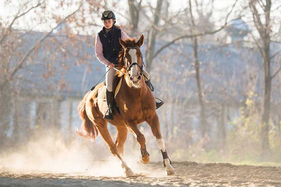 Galopperen met je paard