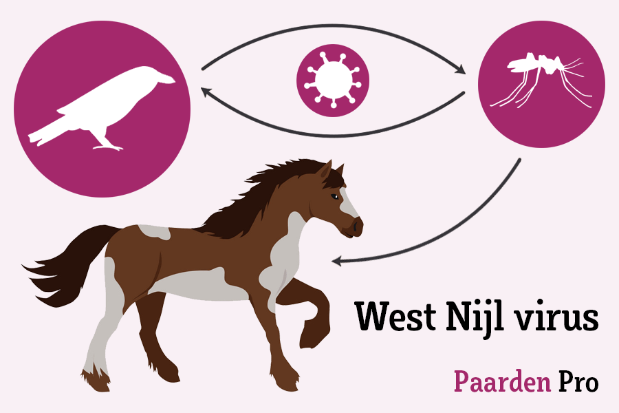 west nijl virus paarden